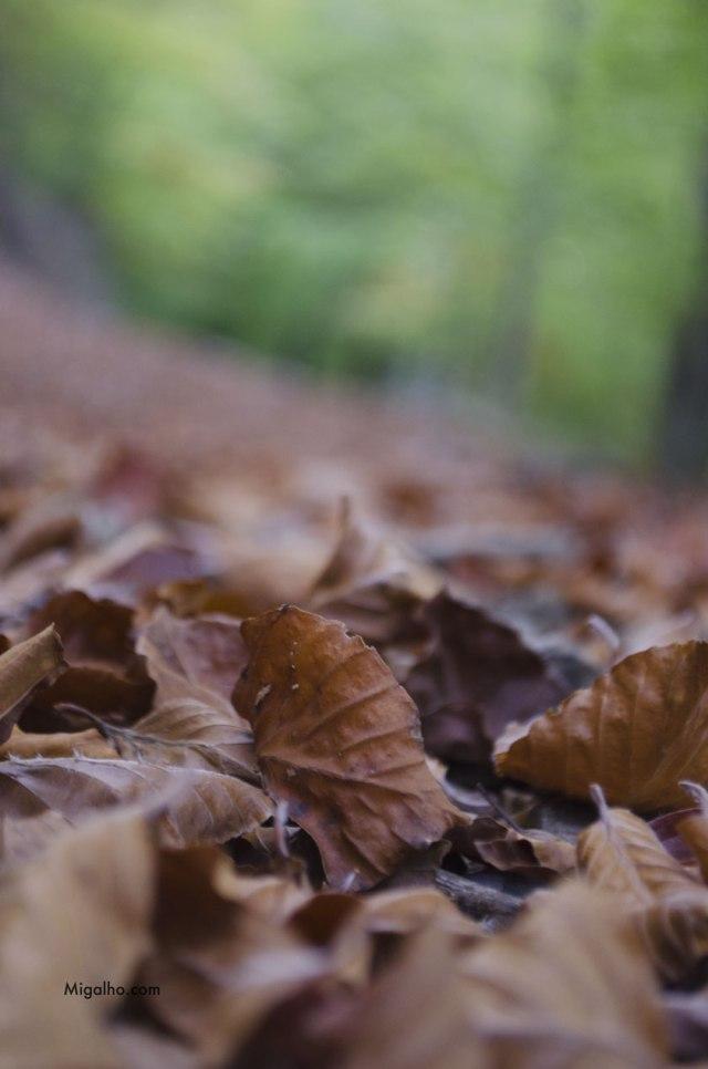 Folhas-secas-media