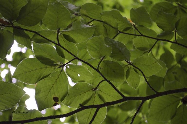 folhas-verdes-media