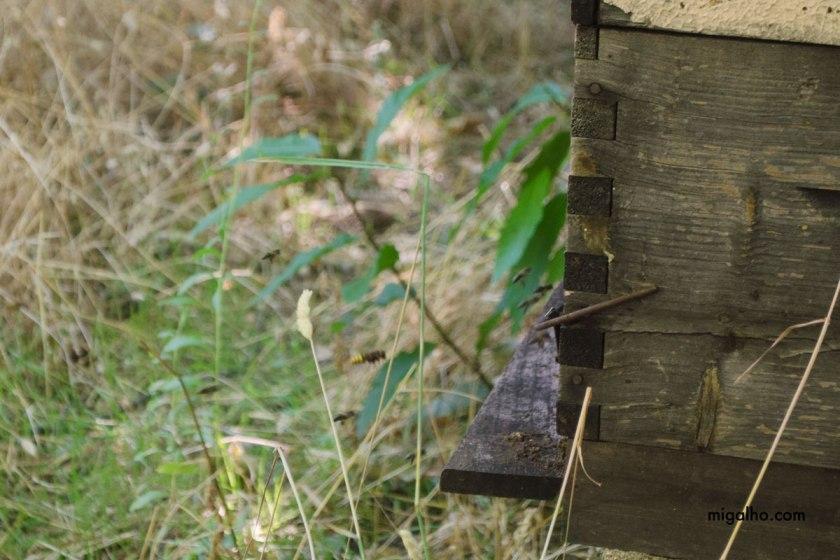 abelhas-na-colmeia